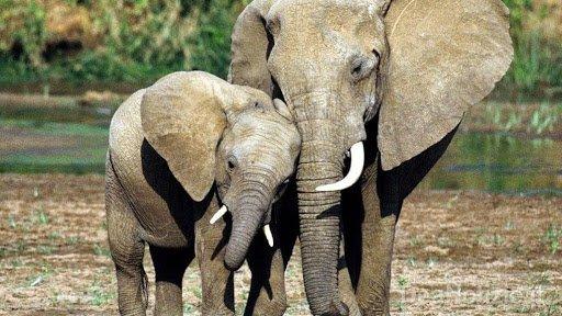 news elefanti