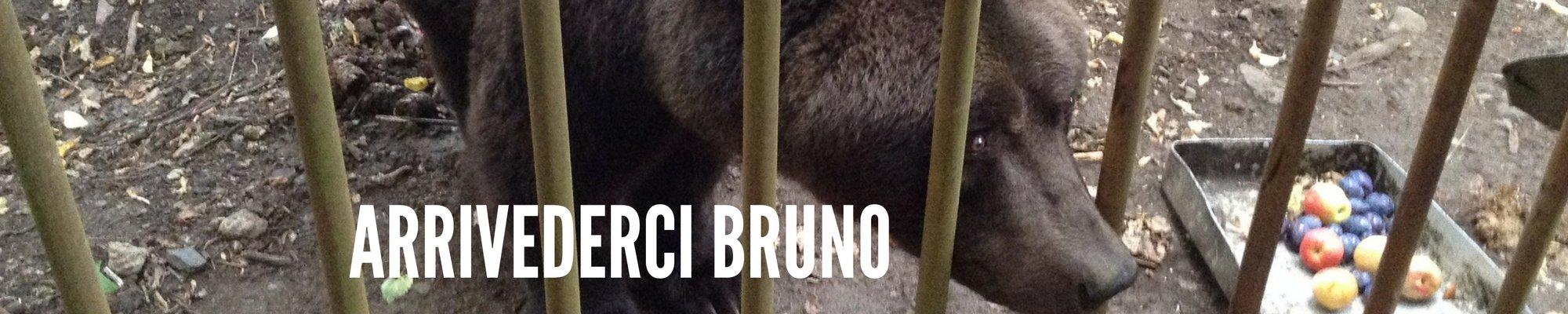 News Bruno Cavriglia