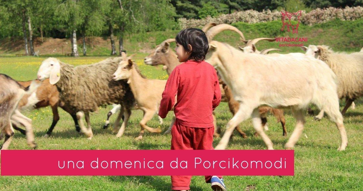 evento una domenica da Porcikomodi