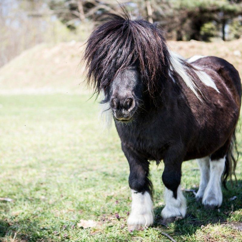 animali - asini e pony vitadacani