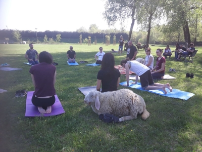 picnic e yoga