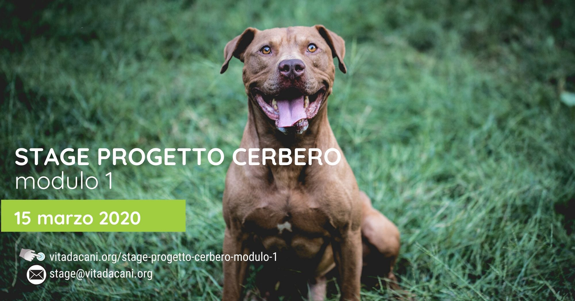 Stage Cerbero