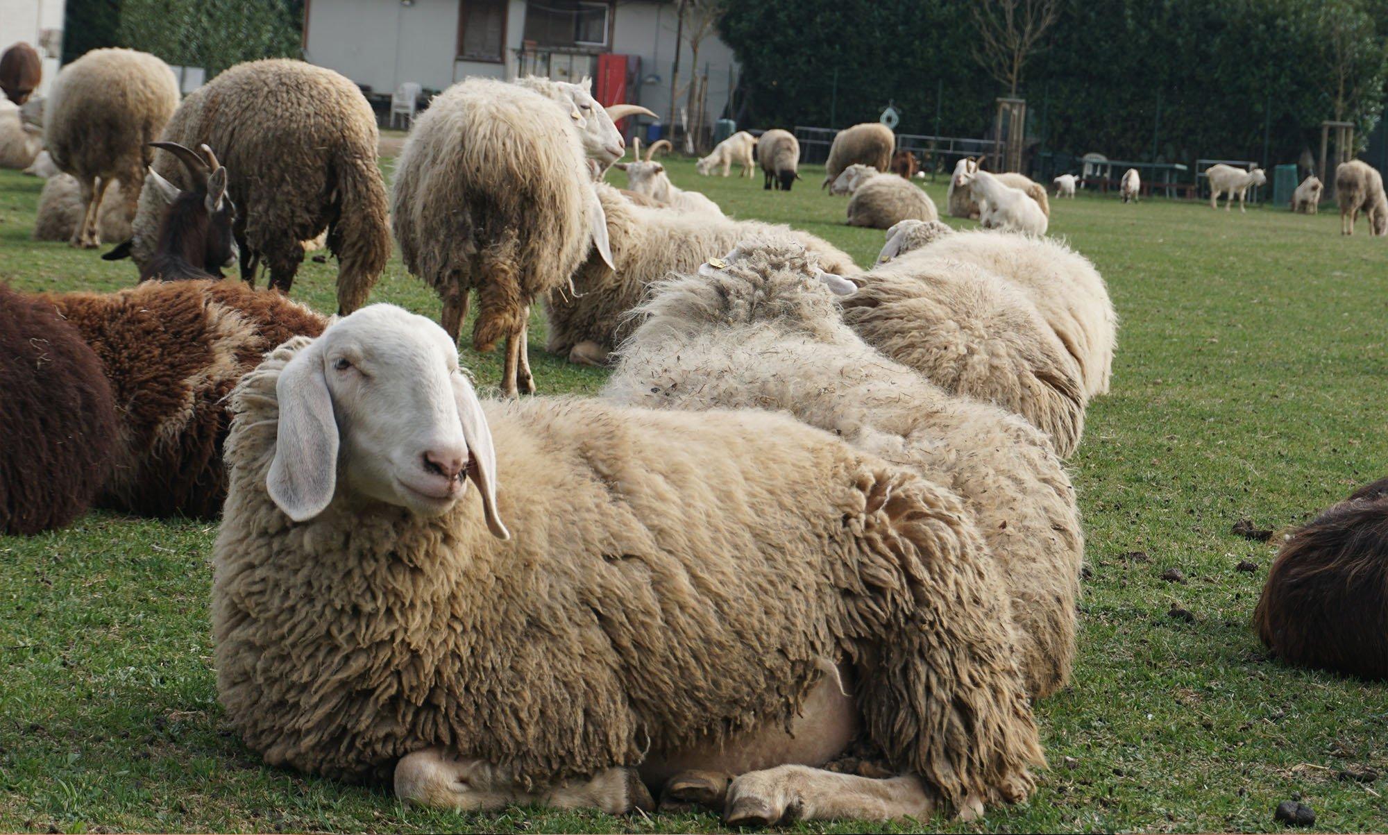 Antonio De Marco - la mattanza degli agnelli