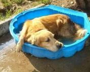 I cani soffrono il caldo?