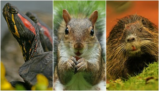 Animali invasivi