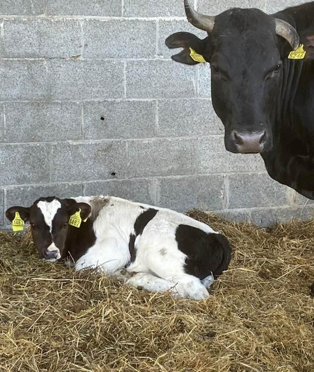vitadacani - sequestro mucche di cassano d'adda