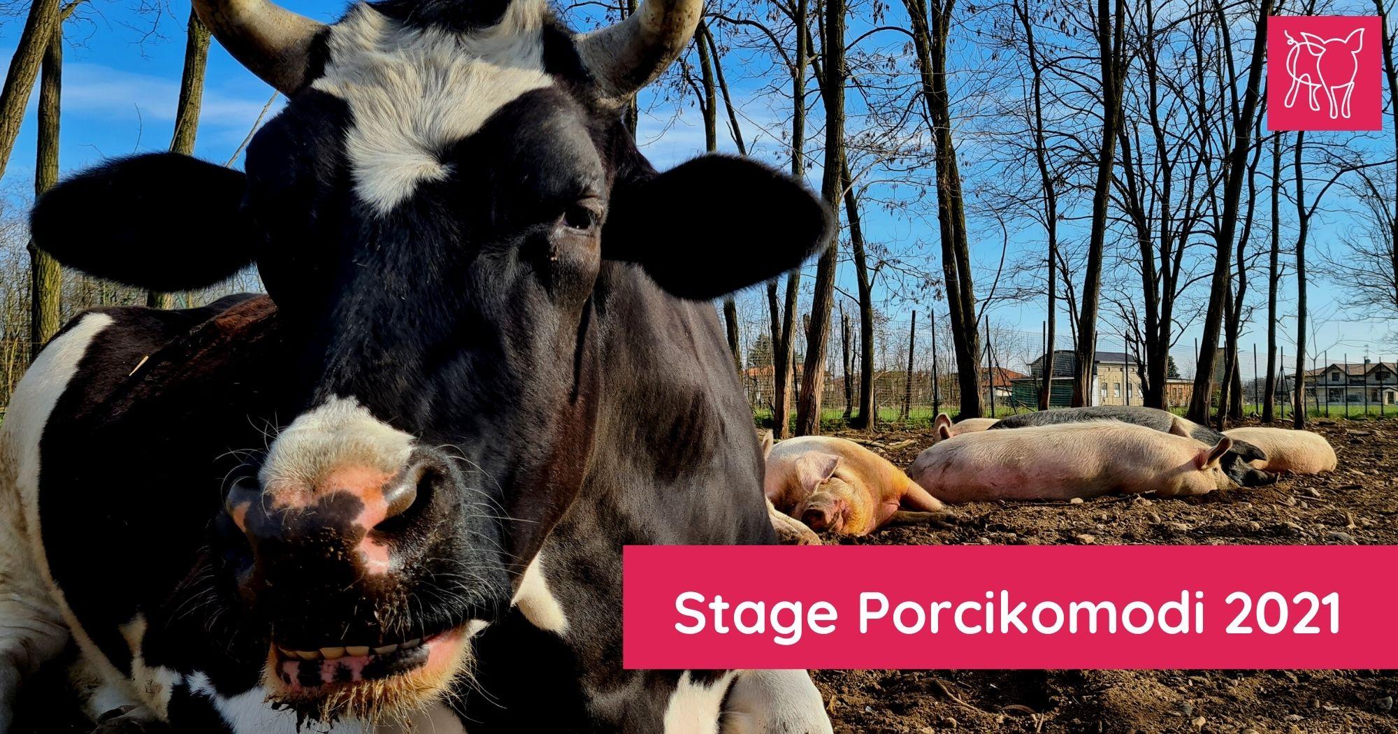 stage Porcikomodi 2021