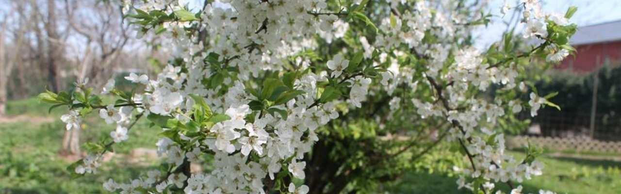 i fiori di Arese in Vitadacani